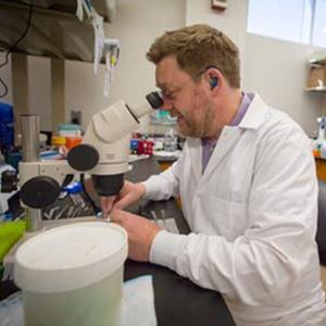 Translational Hearing Center Scientist Working